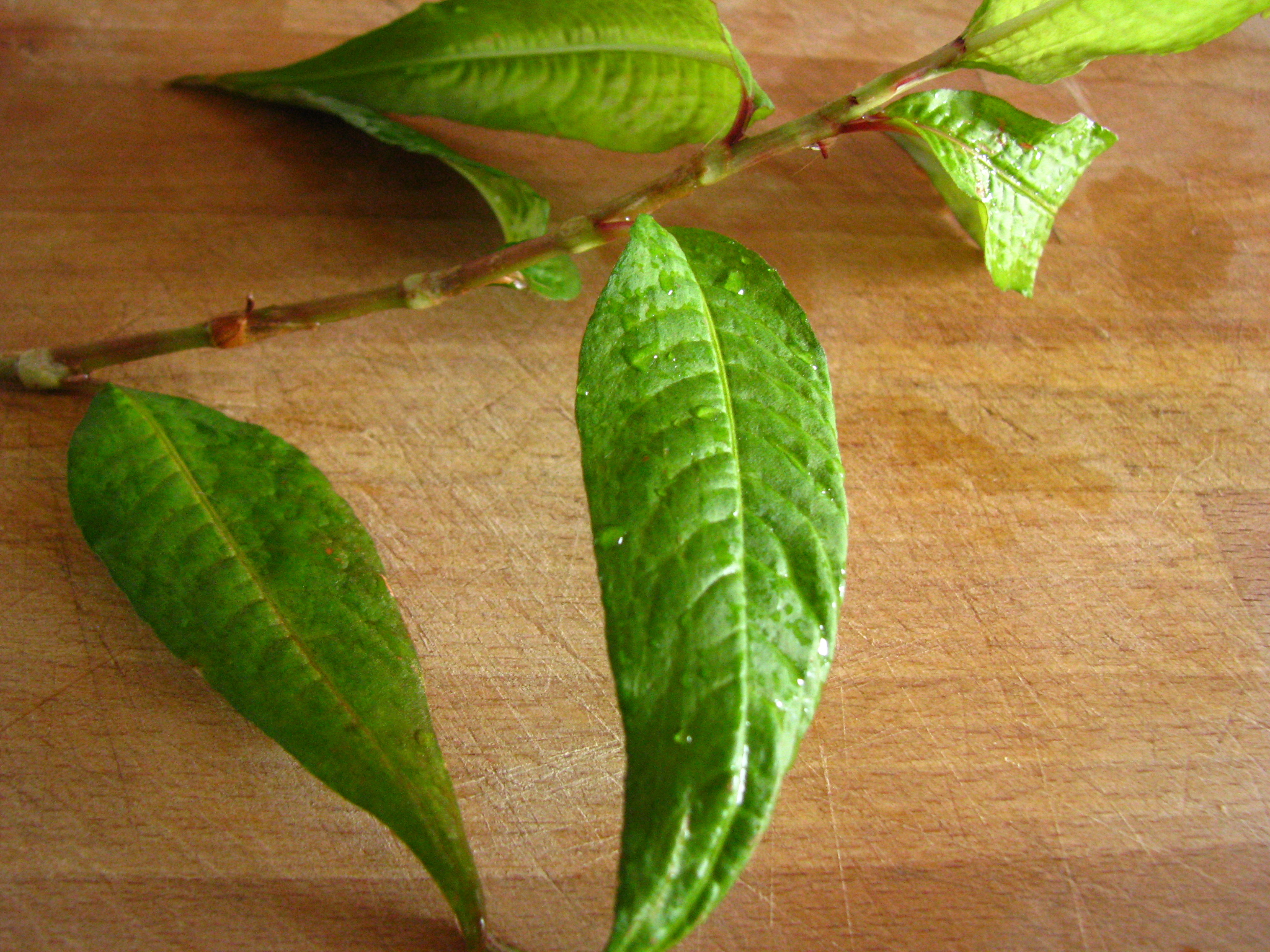 what are curry leaves called in english