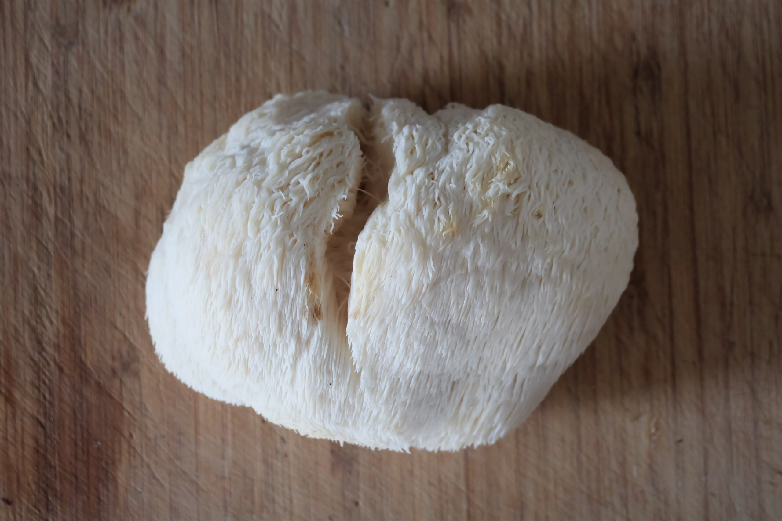 Cure for Alzheimer's? Introducing the Lion's Mane mushroom